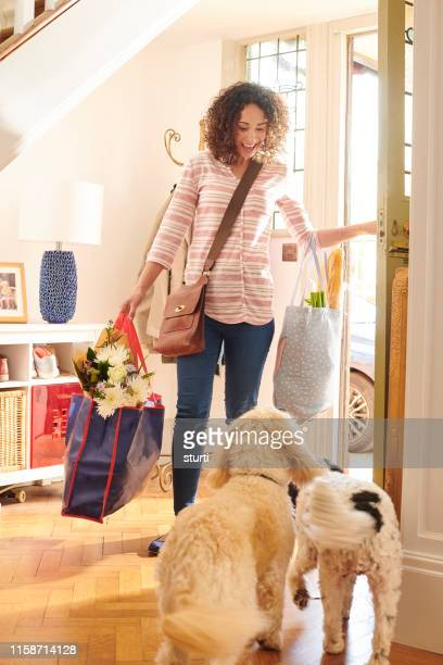 doggy homecoming - greeting stock pictures, royalty-free photos & images