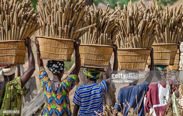 dogon women carrying millet to the village - mali - mali stock pictures, royalty-free photos & images