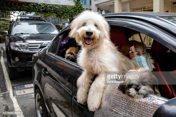 Dogs aboard a car wait to be blessed by a Catholic priest via drive-in to prevent the spread of COVID-19, during a pet blessing at Eastwood Mall to...