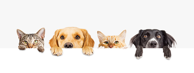 Dogs and Cats Peeking Over Web Banner 930281684