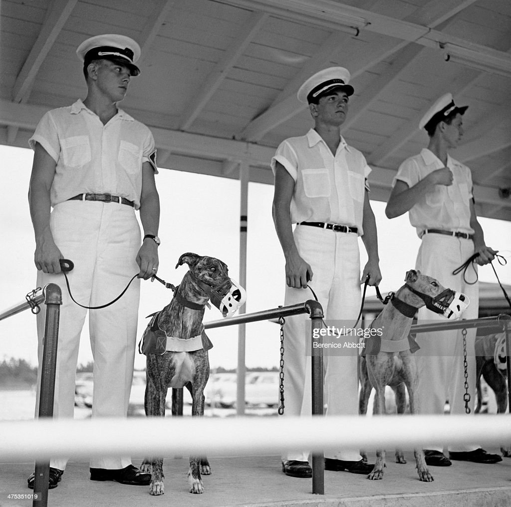 Daytona Dog Track >> Dogs And Handlers At The Greyhound Race Track Daytona Beach