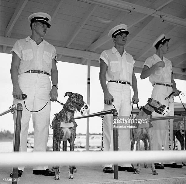 Dogs and handlers at the greyhound race track Daytona Beach Florida United States 1954