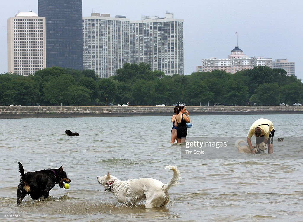 Dogs and people are seen in the water of a dog-friendly