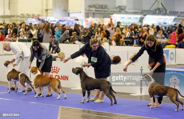 Dogs and their owners attend International Dog Shows of all breeds 'Kievan Rus 2017' and 'The Crystal Cup of Ukraine 2017' in Kiev Ukraine on...