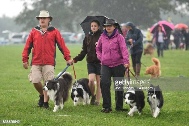 Dogs and their owners brave the conditions to attempt to set a new Guinness World Record for the 'Largest Simultaneous Dog Stay' during the...