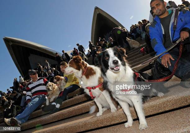 Dogs and their owners gather on the steps of the Sydney Opera House on June 5 2010 for a world first 'Music for Dogs' concert the brainchild of New...