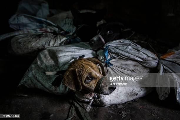 24 Indonesians Taste For Dog Meat Grows In Popularity Pictures