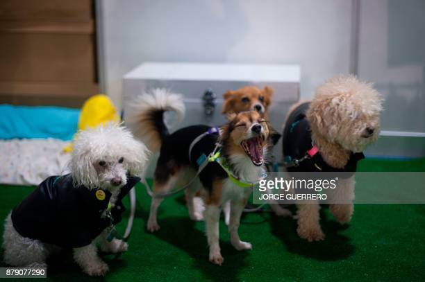Dogs are pictured during the sixth edition of the Mi Mascota fair in Malaga on November 25 2017 / AFP PHOTO / JORGE GUERRERO