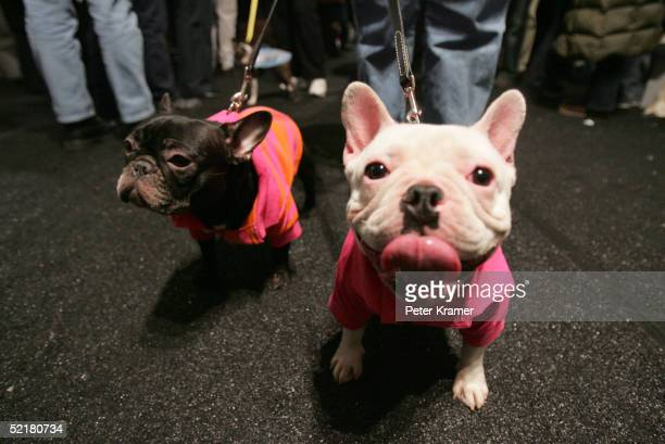 Dogs are seen backstage during the Target Pet Show Fall 2005 fashion show during Olympus Fashion Week at Bryant Park February 11 2005 in New York City