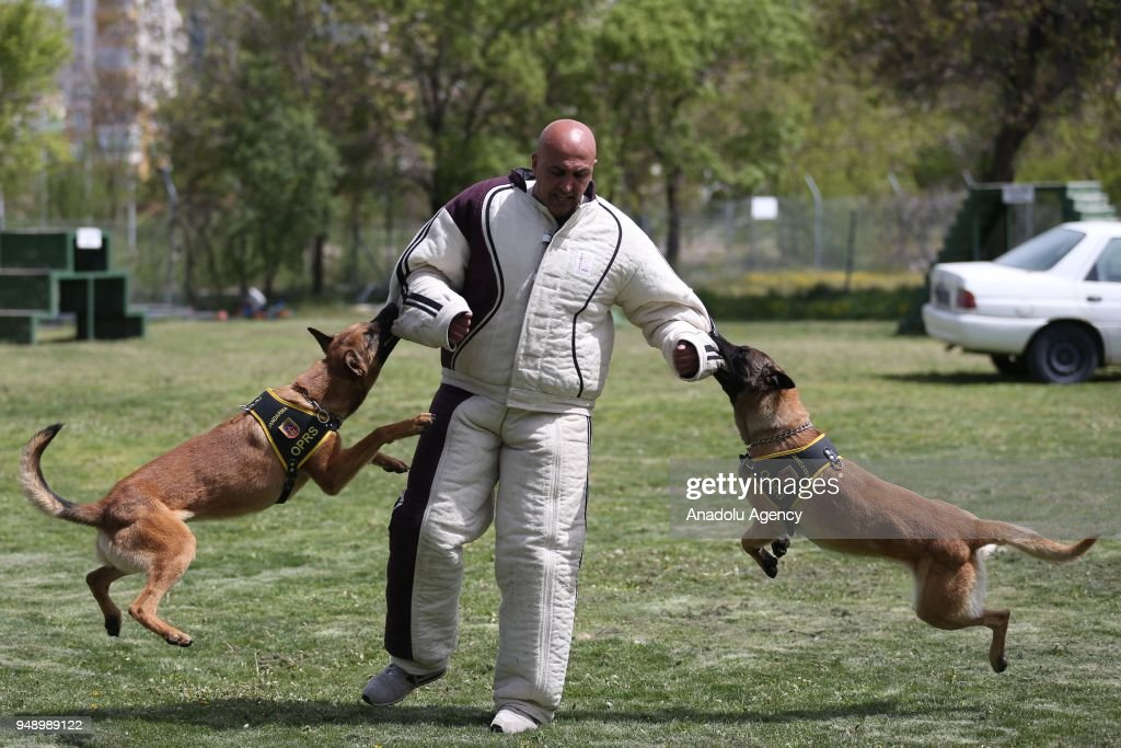 Dog Training For Special Operations In Turkey