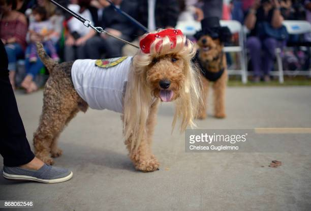 Dogs are seen during the Haute Dog Howl'oween Parade on October 29 2017 in Long Beach California