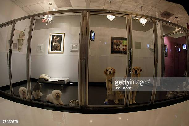 Dogs are seen in their crown jewel suites as they are boarded at Chateau Poochie the luxury hotel for dogs and cats December 13 2007 in Pompano Beach...