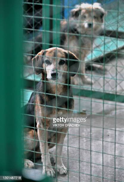 Dogs are seen inside their cages at a center for homeless animals in Minsk on February 25 2011 AFP PHOTO / VIKTOR DRACHEV