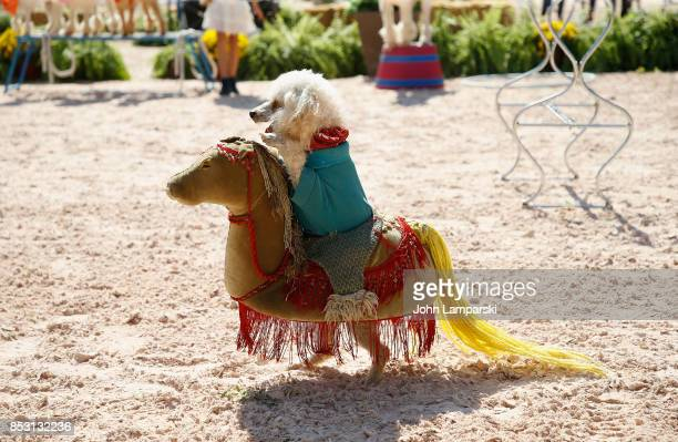 A dogs are seen performing tricks during the 4th Annual Rolex Central Park horse show at Wollman Rink Central Park on September 24 2017 in New York...