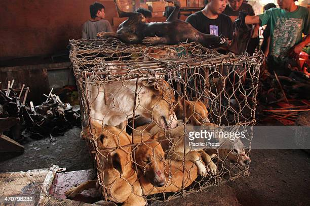 Dogs are traded in traditional markets in Tomohon. They are horribly treated, and beaten to death by a blow to the head. Blood splattered everywhere....