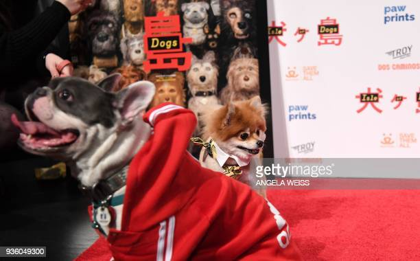 Dogs at the paw sprints special screening of 'Isle of Dogs' at IFC CENTER on March 21 2018 in New York City / AFP PHOTO / ANGELA WEISS