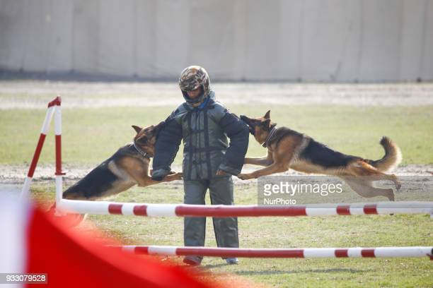 Dogs attack a soldier as part of demonstration during Ghode Jatra festival or Horse festival in Kathmandu Nepal March 17 2018 According to myths it...