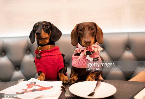 Dogs attend A Sausage Dog Celebration as part of London Dog Week at M Restaurant on March 24 2019 in London England