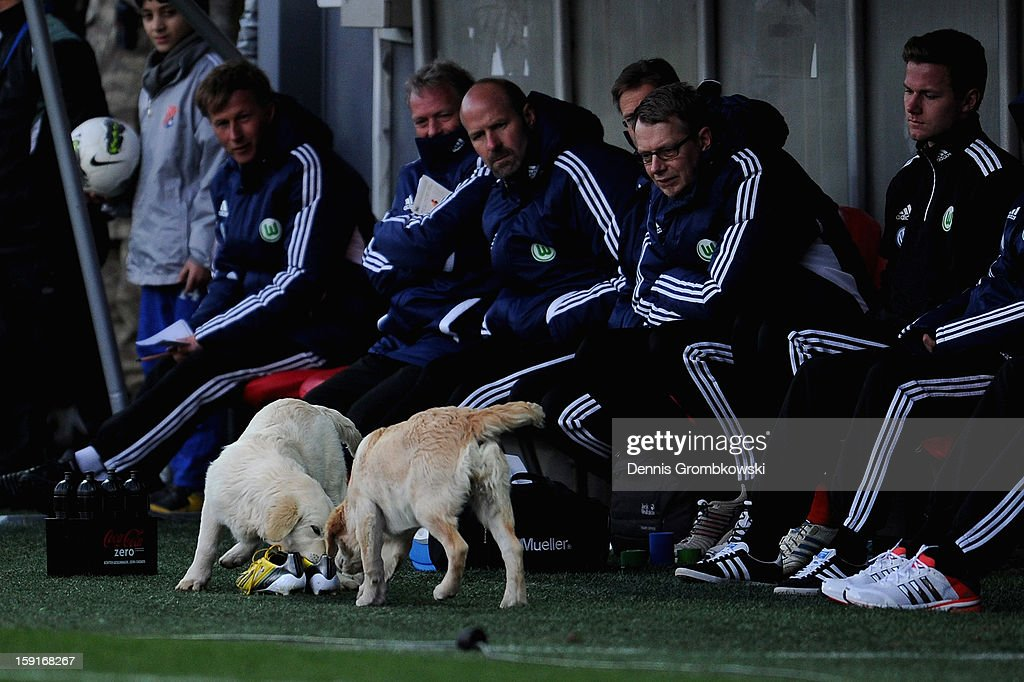 Dogs bite in to shoes in front of the VfL Wolfsburg bench during the friendly match between Werder Bremen and VfL Wolfsburg at Mardan Palace Stadium on January 9, 2013 in Kundu, Turkey.