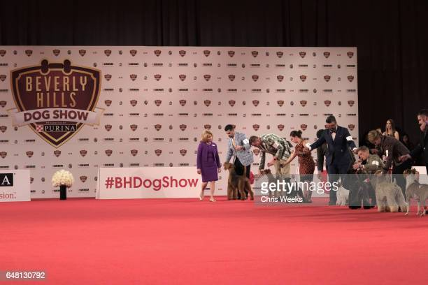 Dogs compete at the Annual Kennel Club of Beverly Hills Dog Show at Pomona Fairplex on March 4 2017 in Pomona California