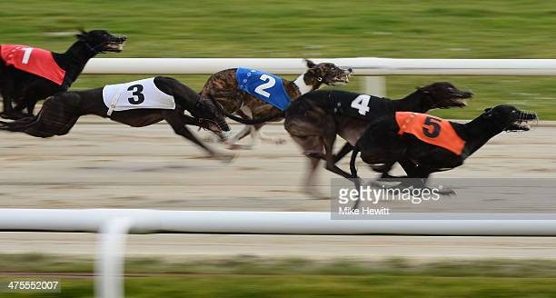 Dogs compete in the sixth race at the Coral Brighton and Hove Greyhound stadium on February 28 2014 in Brighton England