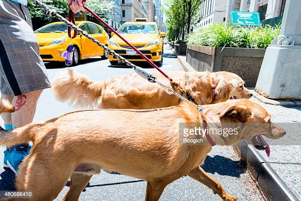 NYC Dogs Crossing the Street in City Outdoors Summer