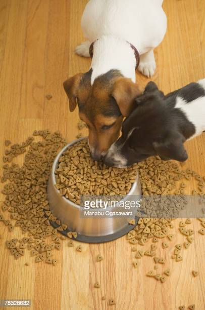 Dogs eating out of overflowing dish
