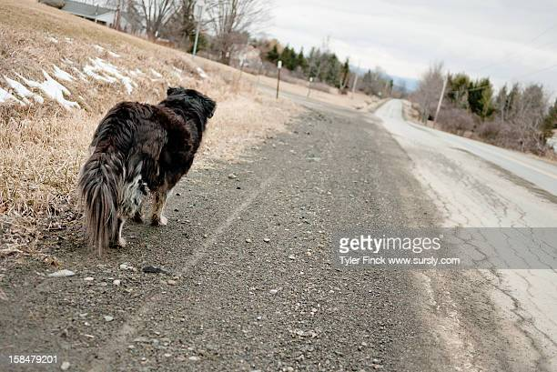 dog's eye view - sursly stock pictures, royalty-free photos & images