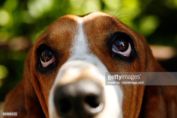 Dog's face on a green background