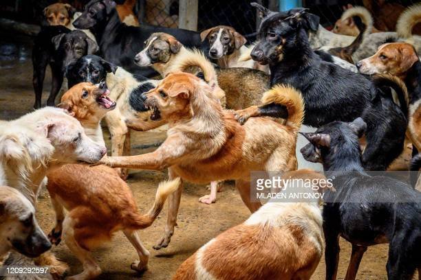 TOPSHOT Dogs fight in a crowded enclosure at Auntie Ju's shelter for stray dogs on the outskirts of Bangkok on April 6 where some 1500 canines...