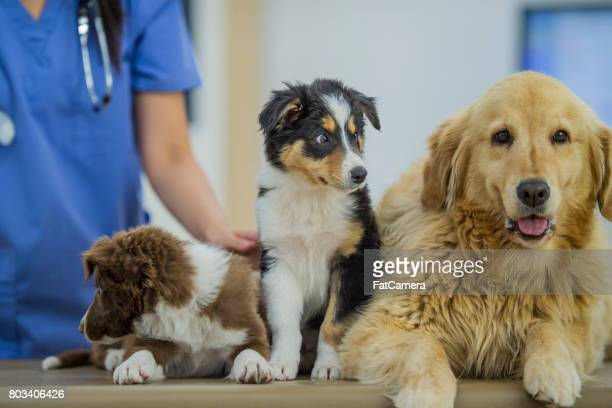 Dogs Getting a Checkup