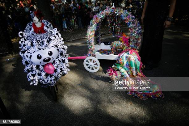 Dogs in costumes attend the 27th Annual Tompkins Square Halloween Dog Parade in Tompkins Square Park on October 21, 2017 in New York City. More than...