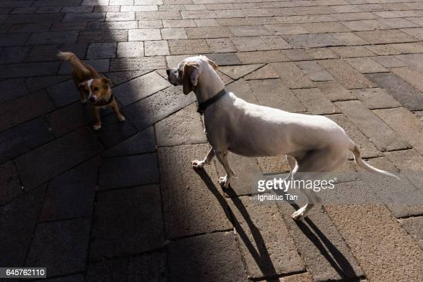 dogs in light and shadow - ignatius tan stock photos and pictures