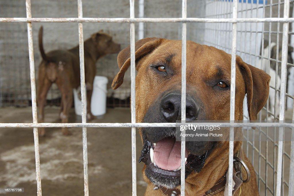Dog Shelter In Fasnia : News Photo