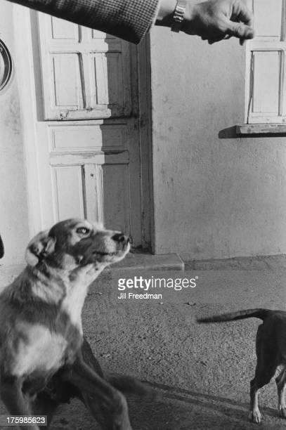 Dogs in the Iberian Peninsula 1980