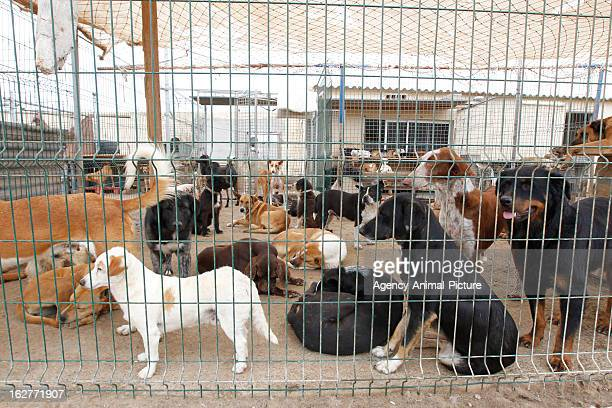 Dogs in the Live Arico Dog Shelter on JUNE 03 2012 in Tenerife Spain