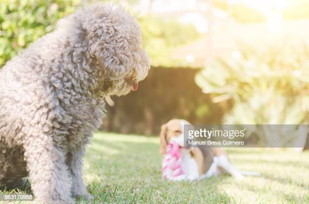 dogs in the park - training grounds imagens e fotografias de stock