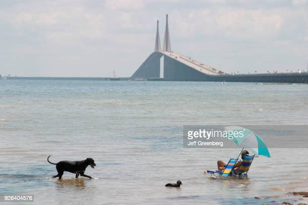 Dogs in the water at Tampa Bay
