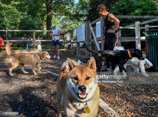 Dogs including Harry foreground and their humans mingle in a small dog park that is causing some friction between locals in Chevy Chase MD