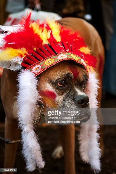 dog's indian headdress - joseph o. holmes stock pictures, royalty-free photos & images