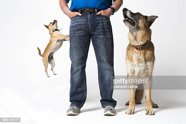 Dogs jumping and at attention with trainer