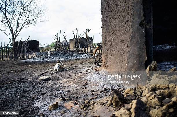 Dogs keep watch in the abandoned homes of Kilelengwani, in Kenya's troubled Tana Delta region, Sept 13, 2009. More than 100 people were killed in...