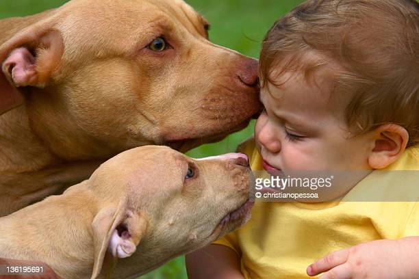 Dogs kissing baby boy