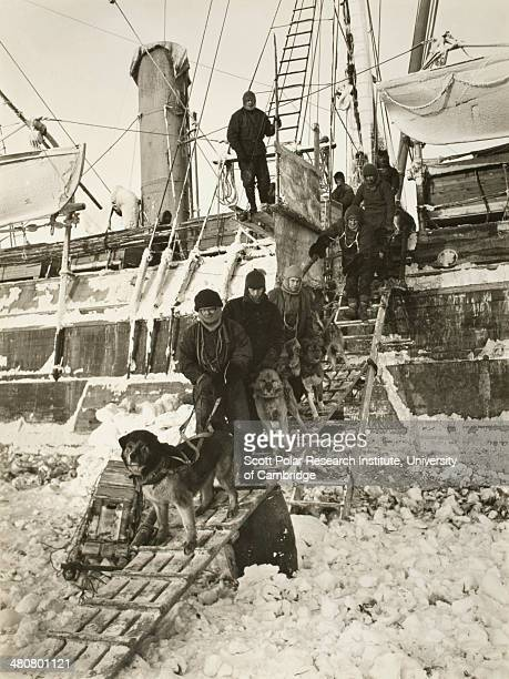 Dogs leaving the 'Endurance' for training during the Imperial TransAntarctic Expedition 191417 led by Ernest Shackleton Shackleton himself watches...