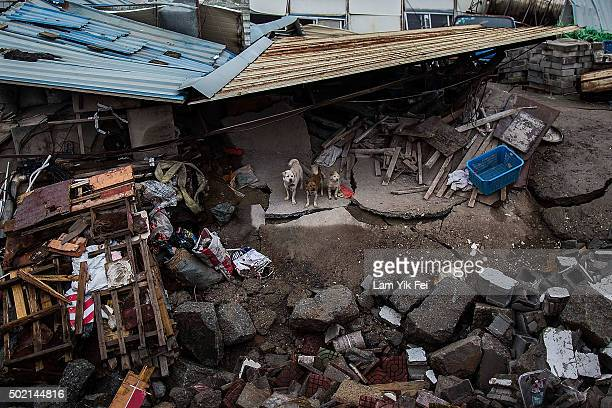 Dogs left stranded at a collapse building after a landslide destroyed or damaged more than 30 buildings on December 21 2015 in Shenzhen China Reports...