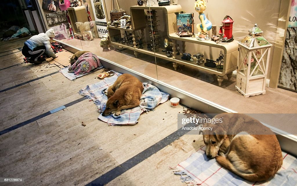 Dogs lie on blankets laid by citizens at entrance of a shopping center in Bakirkoy district of Istanbul, Turkey on January 8, 2017. Citizens feed animals and lay blankets on the floor to warm them up during inclement weather conditions.