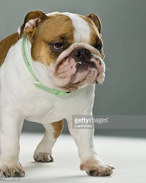 dogs life - ugly dog stock pictures, royalty-free photos & images