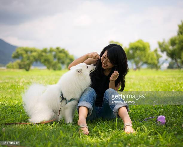 a dog`s life... - japanese spitz stock pictures, royalty-free photos & images