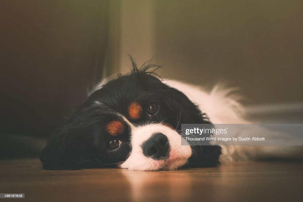 A Dog's Life : Stock Photo