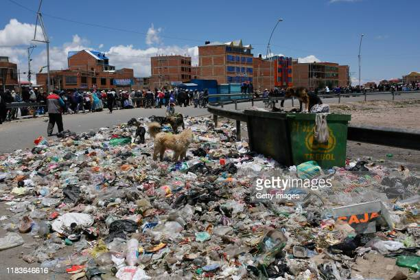 Dogs look for food in the trash in Senkata as supporters of Evo Morales block the road to the Senkata Fuel Plant on November 20 2019 in El Alto...